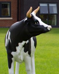 LM-Healthcare-Darnton-House-Cow
