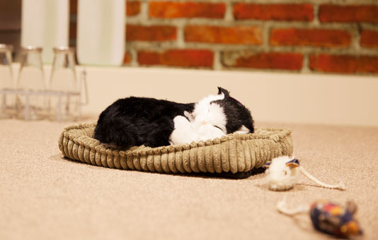 Whittle Hall Dementia Plus cat