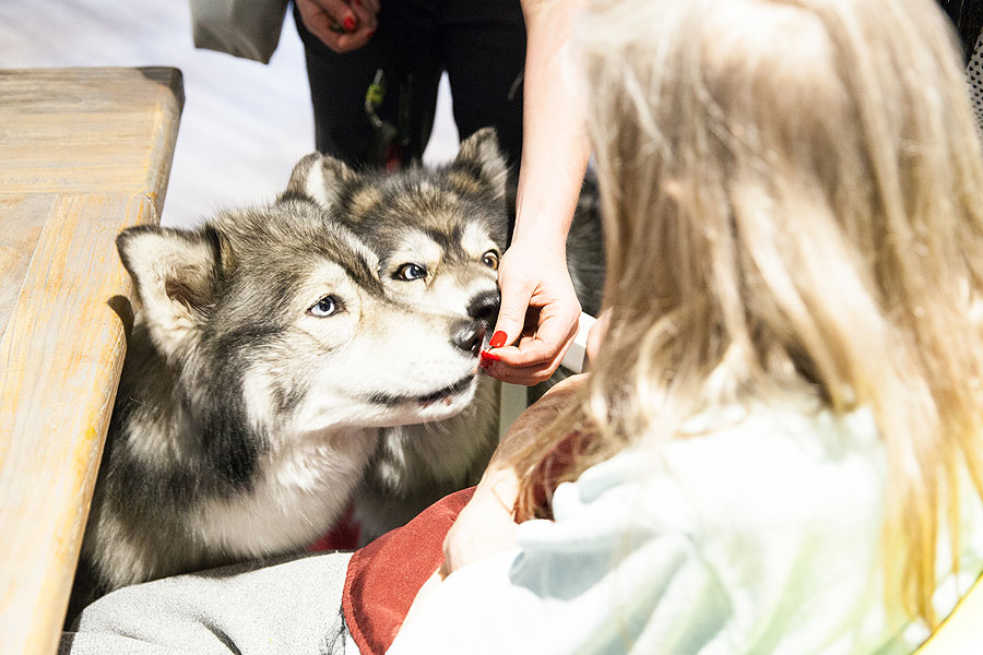 Therapy Huskies visit Whittle Hall