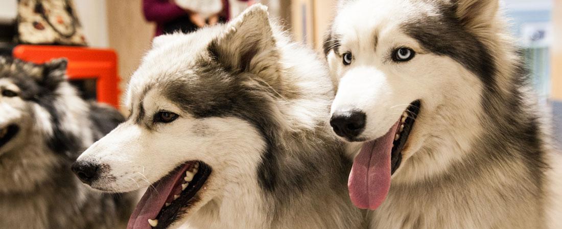 Hulton-House-Activities-animal-therapy-Slider