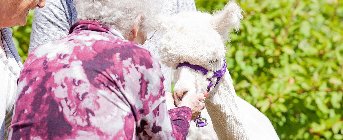 Kitwood-House-Activities-Slider-animal-therapy